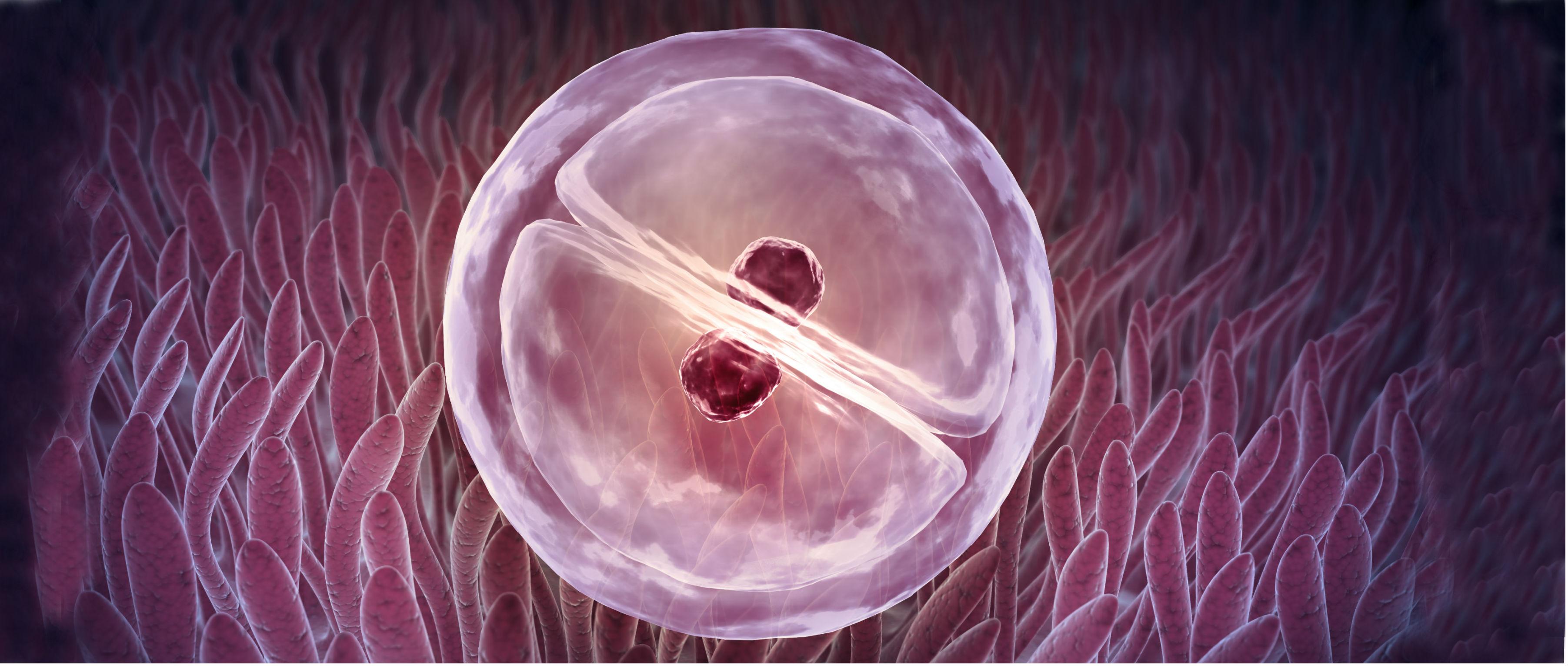 Potencial-de-implantación-del-embrión